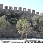 As muralhas e seus pés de Oliveiras
