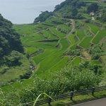 Hamanoura Rice Terrace照片