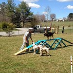 Strut your stuff in our fun agility field. One of the many off-leash areas in the campground.