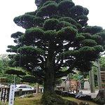 Φωτογραφία: Gokoku Jinja Shrine