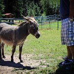 In addition to alpacas, meet mini donkeys, horses, goats, and other animals.
