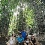 Bosque de bambú con eri