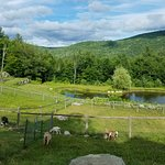Bilde fra Cold Moon Farm Bed & Breakfast LLC