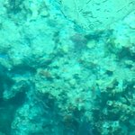 View of coral reef.