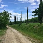 Stunning landscapes of Val D'Orcia