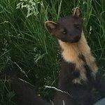 Foto de Speyside Wildlife