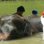 Karbi elephant sanctuary