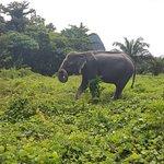 Walk with the elephants