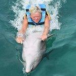 صورة فوتوغرافية لـ Dolphin Discovery