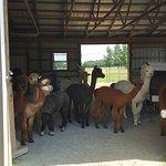 Outstanding Dreams Farm Photo