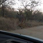 Kudu at the entrance