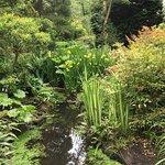 Bild från Botanic Gardens