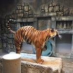Tulsa Zoo의 사진