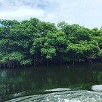 Foto de Caladesi Island State Park