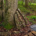 Blackberry Farm - The Garden - The Mushroom Cove