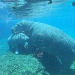 圣地亚哥动物园照片