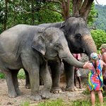Shower with elephants it wonderful day