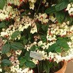 Lauritzen Gardens Omaha's Botanical Center resmi