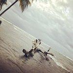 Foto di Playa Cocles