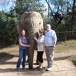 Walking with elephants.