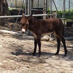 Photo of Corfu Donkey Rescue