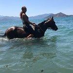 Ảnh về Desperado Horse Ranch