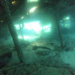 Photo of Octopus Garden Diving Centre