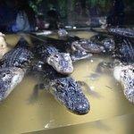 Foto de Alligator Alley Adventures