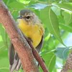Cute little bird we found en route