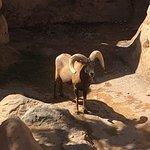 Bild från Arizona-Sonora-öken-museet