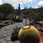 meer cactussen