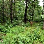 deer in the Dells