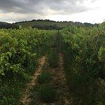 Lovely vineyard!