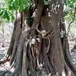 Foto Taman Nasional Komodo