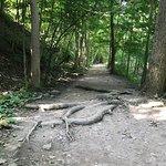Foto di Niagara Gorge Trail