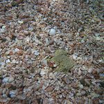 Shells on the sea floor