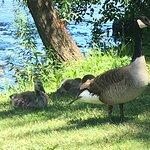 Van Cortlandt Park照片