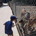 Feeding the reindeers