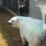 Foto de Denver Zoo