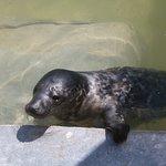 SEA LIFE Trust Cornish Seal Sanctuary Foto