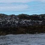 Photo de Farne Islands
