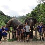Photo of Blue Daily Elephant Care