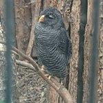 Scottish Owl Centre照片