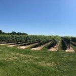 Фотография Jackson-Triggs Winery