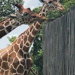 Foto de Zoo Miami