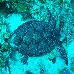 Turtles we love turtles