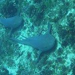 Maya's first sharks!!! Two nurse sharks just chillin'