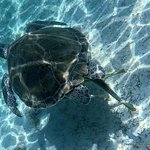 large turtles, so cool to see