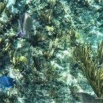 gorgeous fish and underwater scenes