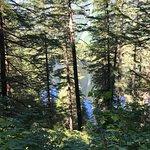 Bilde fra Herring Cove Trail